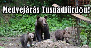 Medvék Székelyföldön