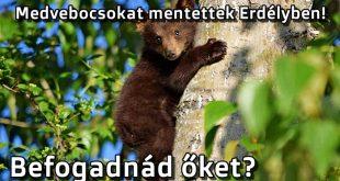 Medvebocsokat mentettek Erdélyben!