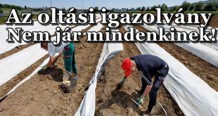 Az oltási igazolványt nehezen szerzik be a külföldön élő magyarok!