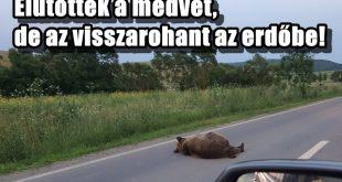 Erdélyben rendszeresen elütnek medvét az utakon!