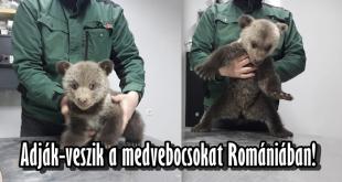 Megmentett medvebocs