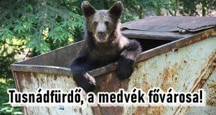 Tusnádfürdőn rendszeresen kukáznak a medvék